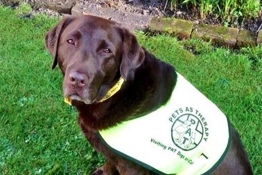 Choco the labrador has visited a school and a home for people with dementia in Oxfordshire